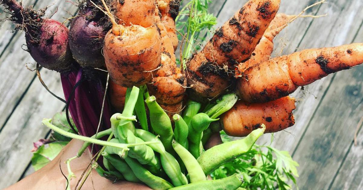 Légumes du jardin - rentrée en santé | Inspire Mouvement